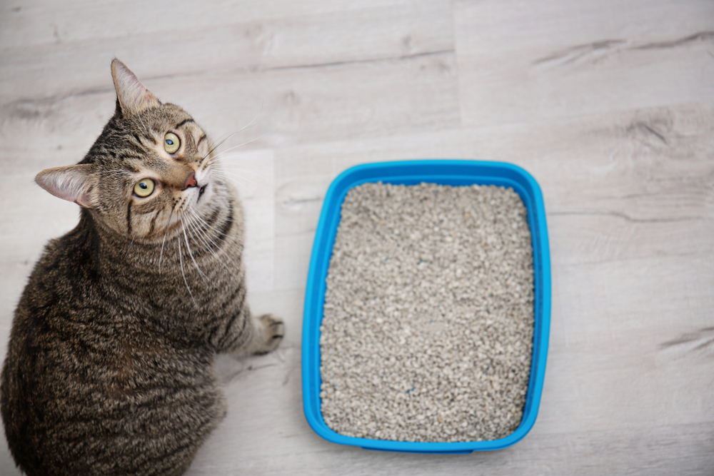 The Top 6 Luxury Cat Litter Boxes for our Feline Friends