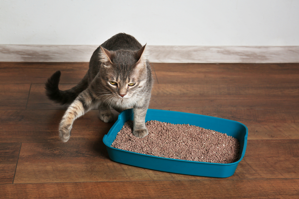 How to Choose your Cat Litter Box?