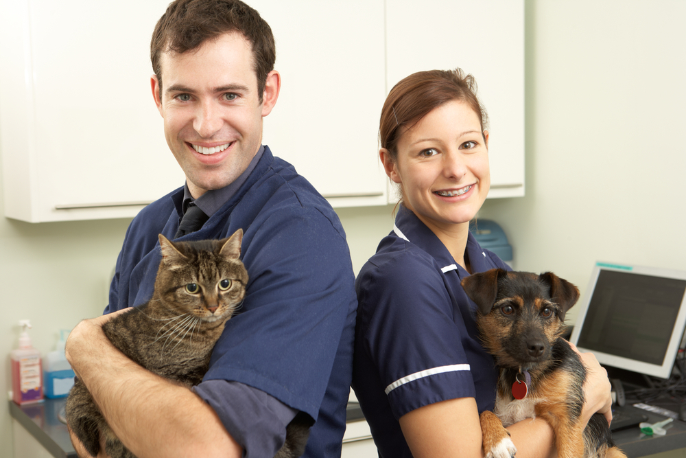 THE 12 Questions to Ask When Choosing Pet Insurance