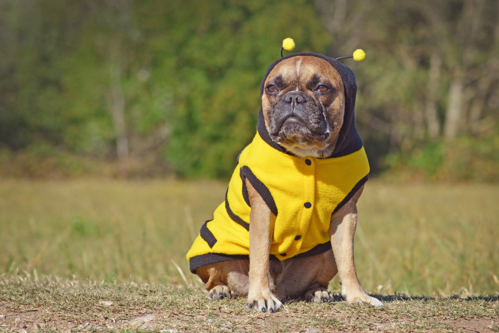 Pets Clothes: 7 Benefits and Styles
